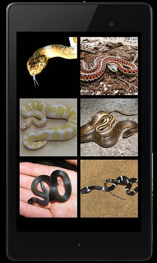 Snake Sounds