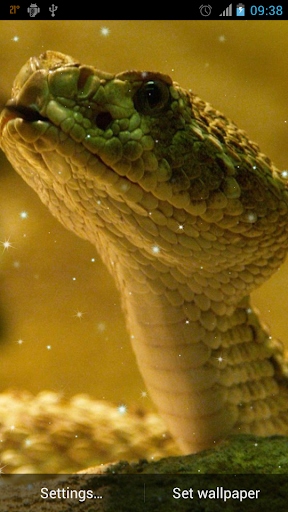 Snake Live Wallpaper for android 2.3.5