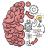 icon Brain Test 2.689