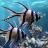 icon alpha.aquarium.hd.livewallpaper 2.30