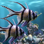 icon The real aquariumfree
