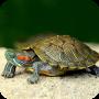 icon Turtle Wallpaper